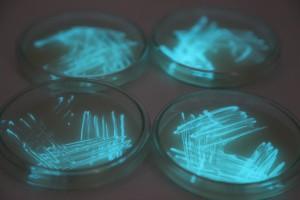 Photobacterium Phosphoreum,  1/2s, f/4, ISO 3200